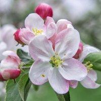 Цветочное настроение... :: Марина Назарова