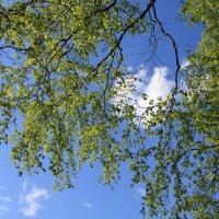 Весеннее облачкр :: Наталья Лунева