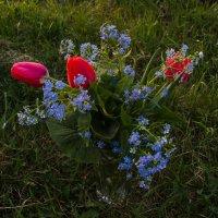 Душу радует и глаз цветочков простота, есть в них и яркости и неги красота.... :: Надежда
