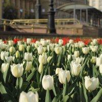 Весна в город :: Людмила Быстрова