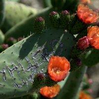 Цветение кактуса :: ФотоЛюбка *