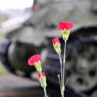 Цветы :: Олег Огорельцев
