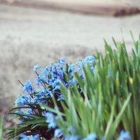Первые весенние цветы :: Натали V