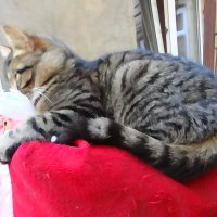 Кот на спинкe дивана. :: Андрeй Владимир-Молодой