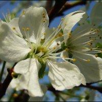 Любимые цветы :: Людмила (Руца)