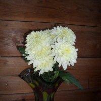 Цветы в вазе :: Анатолий