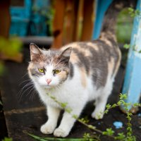 Кошечка :: Наталья Горбачева