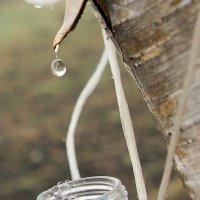 Весна и березовй сок :: Михаил Дьячков