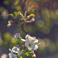 Цветы на закате 3 :: DmitryLis