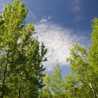 майское небо :: Михаил Антонов