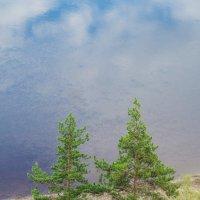 Две сосны на берегу :: Сергей Шаврин