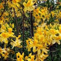 Цветы из Ботанического сада :: Владимир Бровко
