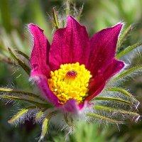 Цветы :: Сергей Перегудов