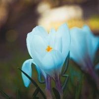 Flower :: Дмитрий Кудряшов
