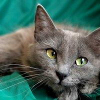 Вот такие нынче бездомные кошки :: Наталья Гордеева