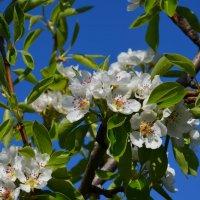 сады цветут :: Виктор Хорьяков