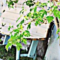 лето близко :: даша зырянова
