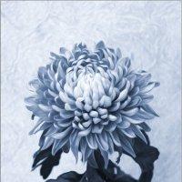 Цветок в вазе :: Volkov Igor