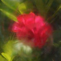 роза в экспрессии :: Елена Мартынова