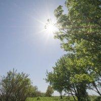 Солнце в зените. :: Андрей Чиченин