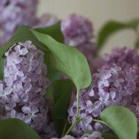 Влюбленный листочек... :: Kathy Bespalova