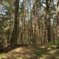 В лесной чаще :: Олег Козлов