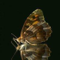 Бабочка :: Вячеслав Мишин