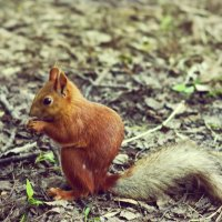 Вот такую красавицу я встретила в парке, на Солнечном острове, Краснодар!! :: Ксения Заводчикова