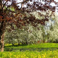 Весна в Усть-Ижоре :: Денис Матвеев
