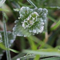майские заморозки :: Андрей Степанов