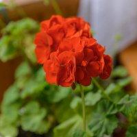 Растения :: Sergey Izotov
