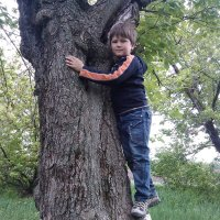 дерево идети :: filya zub