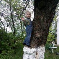 дерево и дети :: filya zub