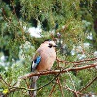 Птица :: Юлия Грозенко