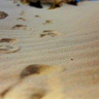 ... песок, по которому ты ходила ) :: Лика Виктори