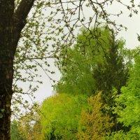 Краски весны на пасмурном фоне :: Вячеслав Печенин