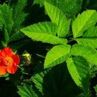 Листик,цветочек и жучёчек. :: Владимир Гилясев