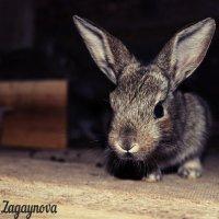 Кролик :: Ксения Загайнова