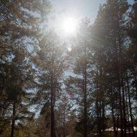 Повисло солнце меж ветвей... :: Ольга Антонюк