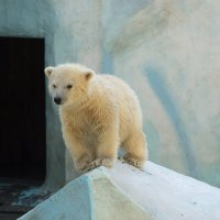 Новосибирский зоопарк :: Андрей Верясов