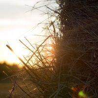 Стог сена на закате дня :: Николай Николаенко