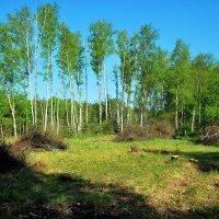 лес рубят, щепки летят :: Елена Познокос