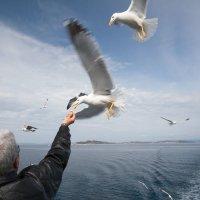 ручные чайки Греции :: Вячеслав Липинчук