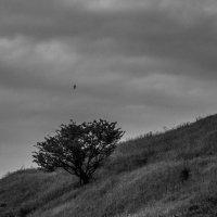 Летим :: Stas Storcheus
