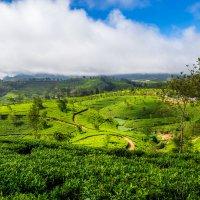 Шри-Ланка Нувара Элия :: Дмитрий Кулиш
