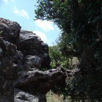 И на камнях растут деревья... :: Нелли *