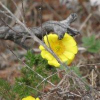 Весенний цветок :: Ольга Иргит