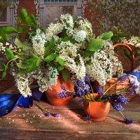 Весны мгновение... :: Алла Шевченко