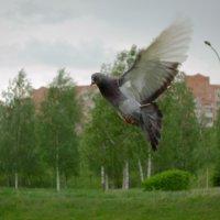 птица мира :: Алексей Гончар