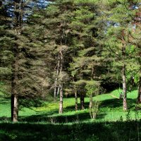 В лесу :: Marina Timoveewa
